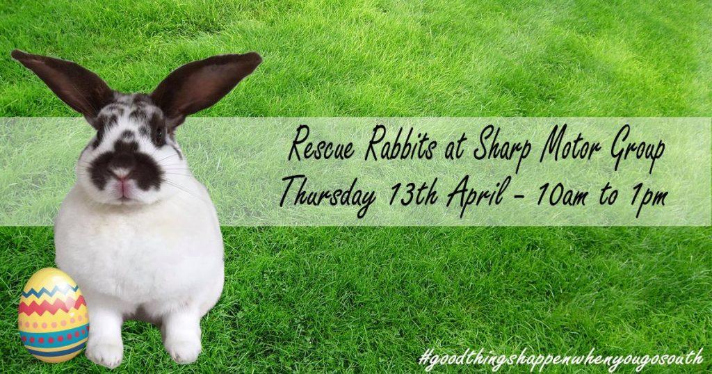 Rescue Rabbits at Sharp Motor Group