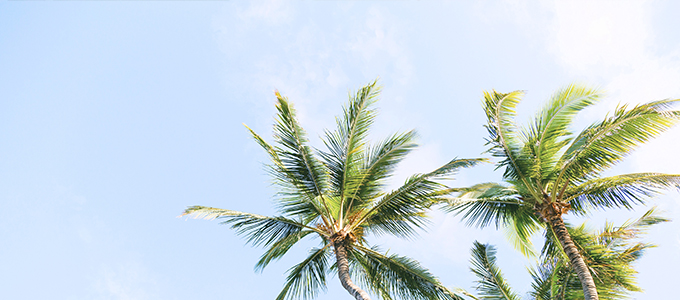 Palm Trees + Blue Skies - Little Palm Creative Co. Services - Gold Coast Marketing and Web Design